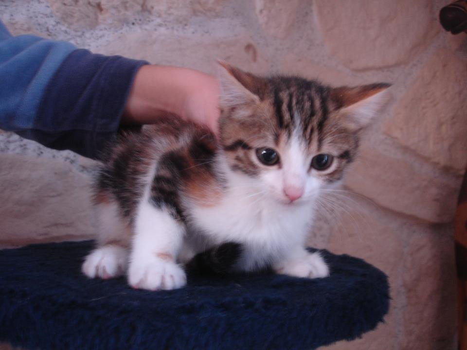 Adorable chaton à adopter 267641_4208660413096_903750115_n