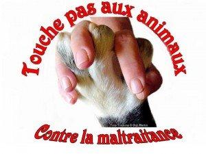 STOP A LA CORRIDA!!!!! b18322c01-300x225