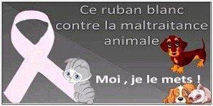 STOP A LA CORRIDA contre-la-maltraitance-des-animaux-1-300x150