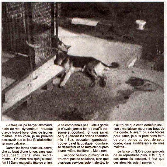 maltraitance-animale
