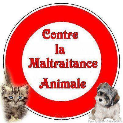 CHIEN ENTERRE VIVANT: LA FONDATION PARTIE CIVILE 557258_419483611439073_1777384681_n