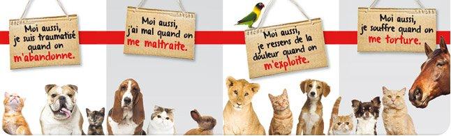 PAROLES D'ANIMAUX: ON VEUT UN STATUT JURIDIQUE!!!!! bandeau_sensible1
