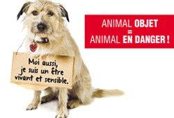 PETITION 2013: année d'un nouveau statut juridique de l'animal? statut-juridique-actu