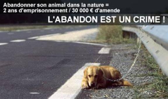 L'ABANDON EST UN CRIME 7087_518379134878686_523783282_n