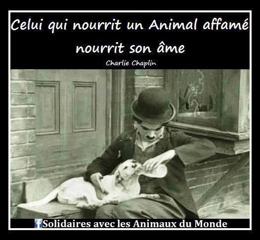 Citation de Charlie Chaplin 1187153_548902635159669_1561309391_n
