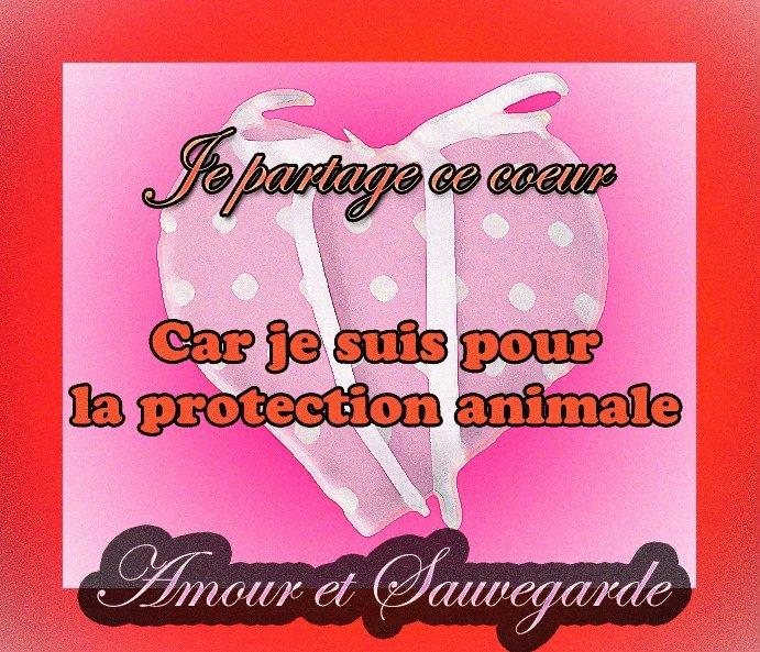 POUR LA PROTECTION DES ANIMAUX 602076_559760327407233_1462622983_n